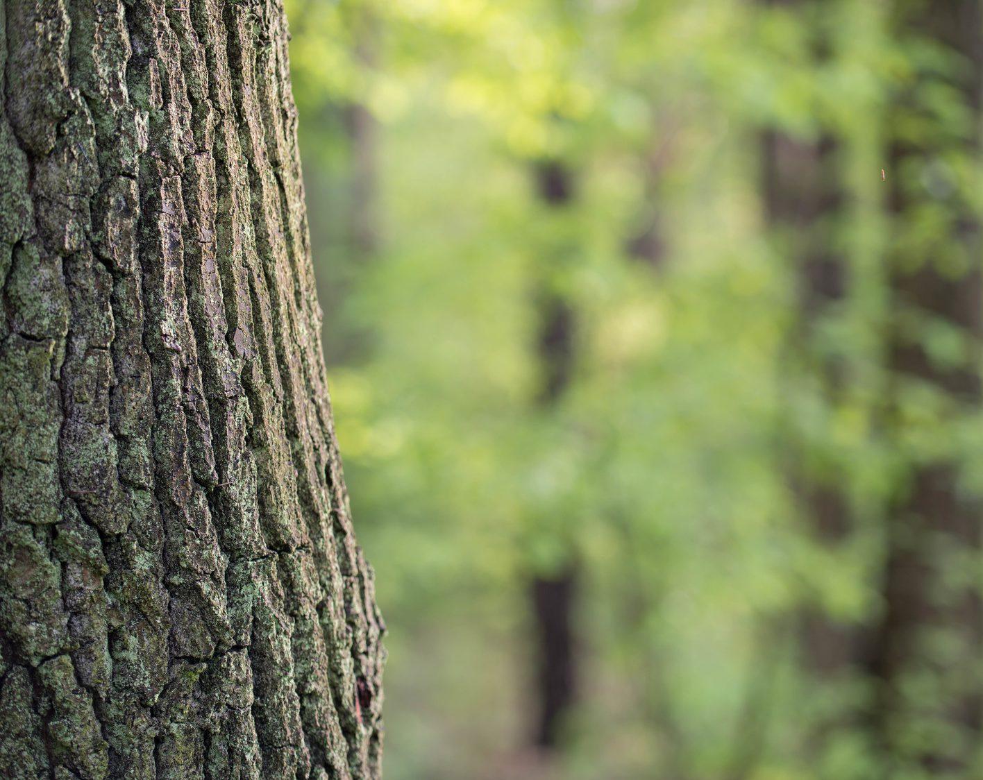 Quel Bois Utiliser Dans Son Poêle Ou Insert Aqua Feu
